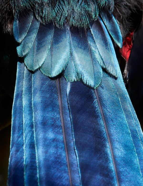 美しい鳥の羽根の写真 by Thomas Lohrby 2