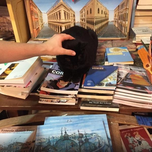 猫の本屋 3
