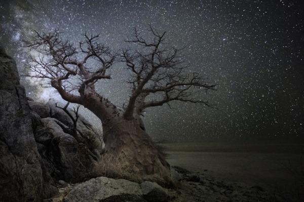 星空と古い木の美しい風景写真 10