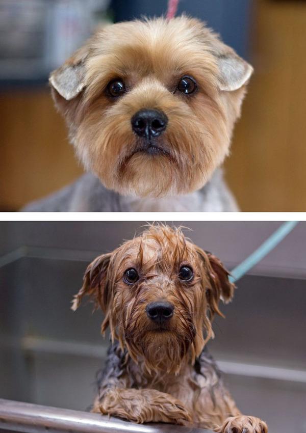 もふもふな動物たちがお風呂で変貌する…!【犬猫画像】 (13)