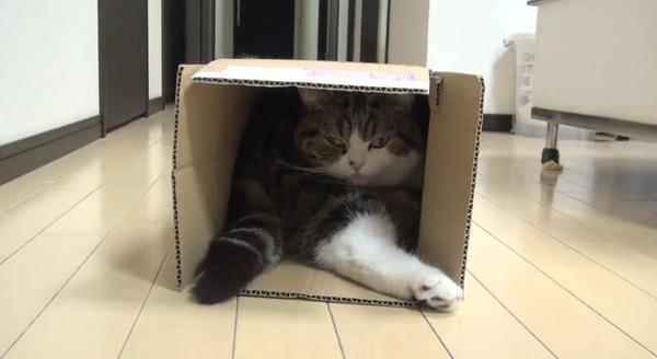 ジャストフィット猫 9