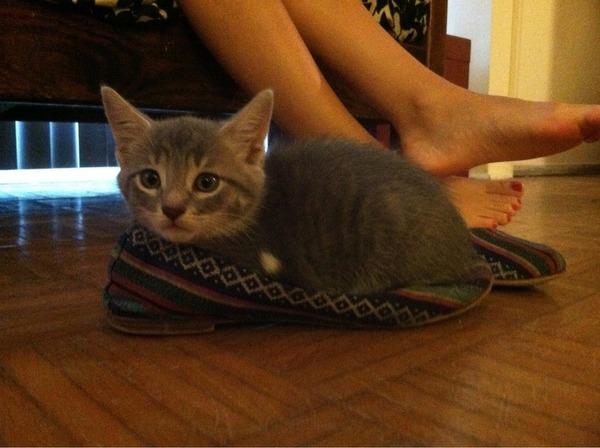 ジャストフィット猫 4