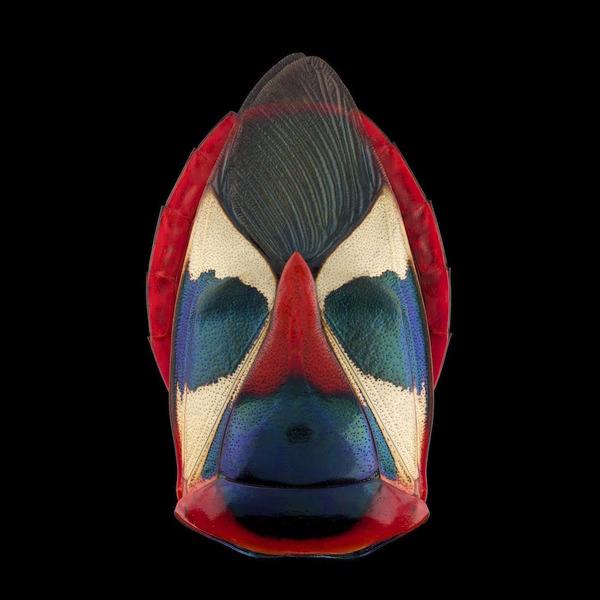 マクロ撮影された昆虫の外観がカラフル美しい (8)
