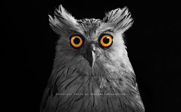 可愛いフクロウの画像 10