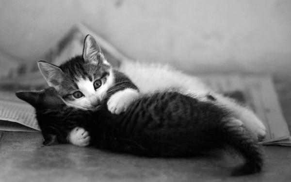 猫のバレンタインデー!【猫ラブラブ画像】 (68)
