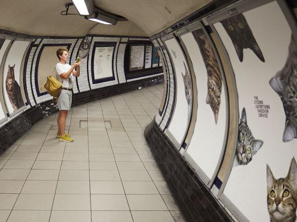 猫だらけ!猫の写真で満たされたロンドンの地下鉄 (1)