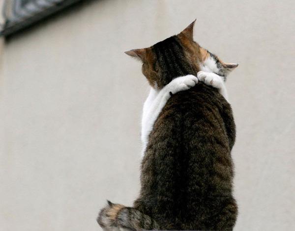 猫のバレンタインデー!【猫ラブラブ画像】 (51)