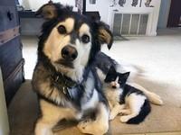 異なる種なのに仲良しそっくり!似てる動物たちに癒される