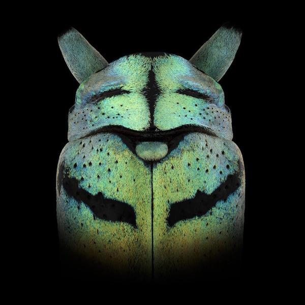 マクロ撮影された昆虫の外観がカラフル美しい (4)