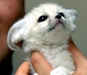 小さくて可愛いすぎる!ベイビーキュートな動物の赤ちゃん画像特集