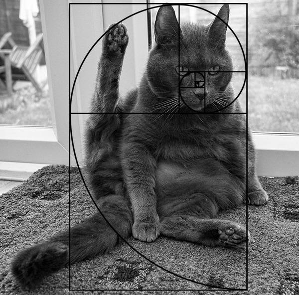 猫と黄金比の関係画像!猫の美しさの秘訣は黄金比にあり (21)