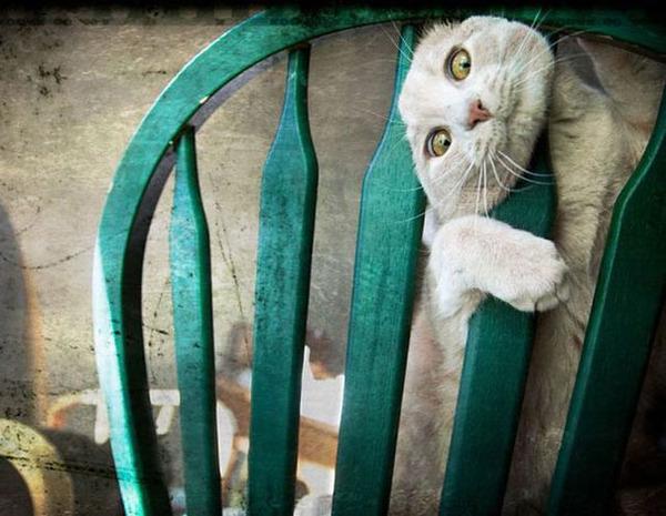 大ピンチに陥ったドジっ子なにゃんこ達!【猫画像33枚】 (5)