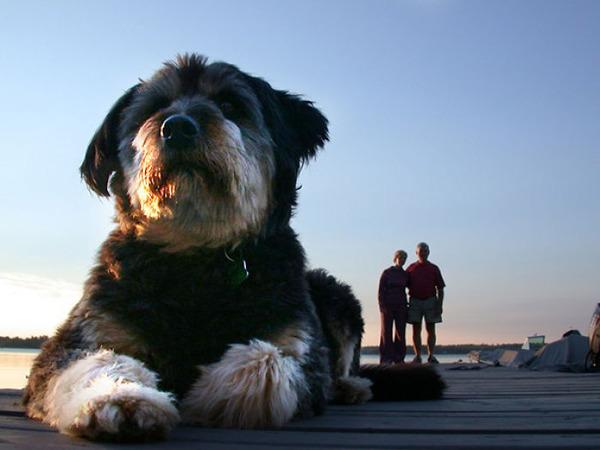 遠近感と錯覚の関係で超巨大に見える犬画像 (4)