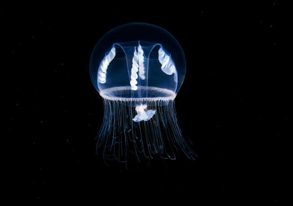 神秘的!北極圏に存在する未知の海洋生物たちの画像 (1)