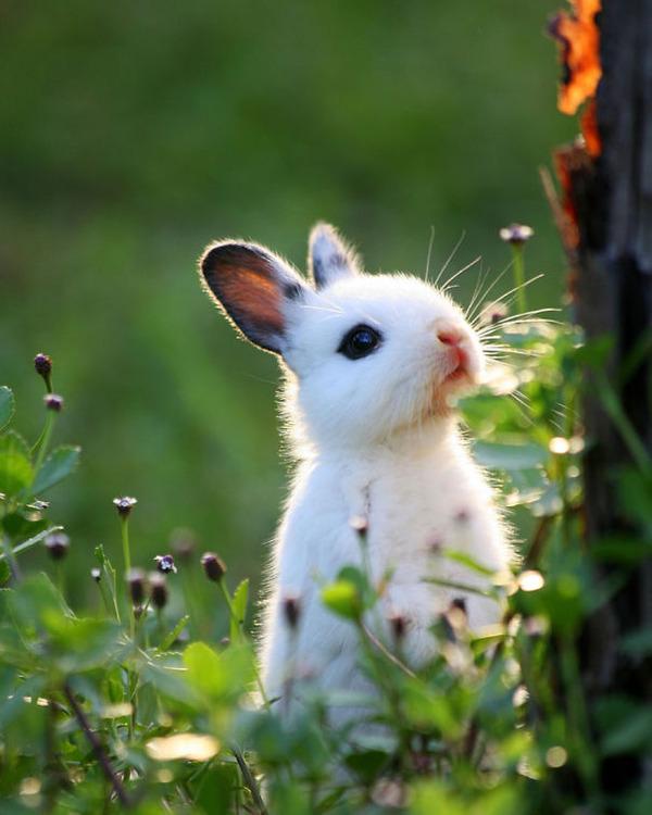 超ふわふわ!モフモフで愛らしいウサギの画像20枚 (18)