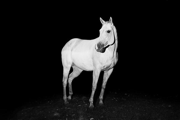 野生の馬の写真 (8)