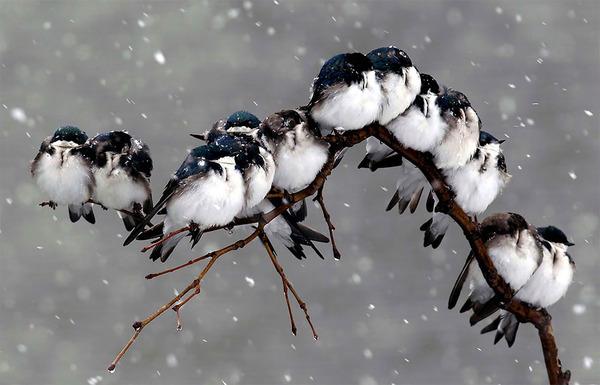 小鳥が温まる為に皆で寄り添っている可愛い画像 (8)