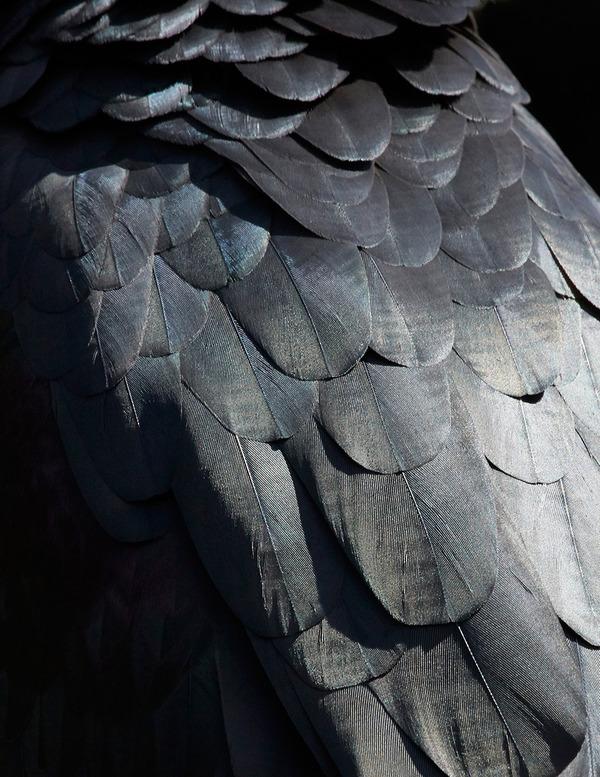美しい鳥の羽根の写真 by Thomas Lohrby 5