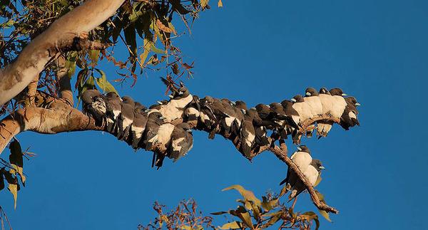 小鳥が温まる為に皆で寄り添っている可愛い画像 (13)
