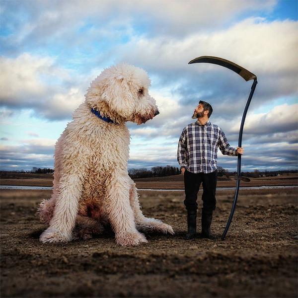 犬を大きくする!そんな夢をフォトショップの画像加工 (3)