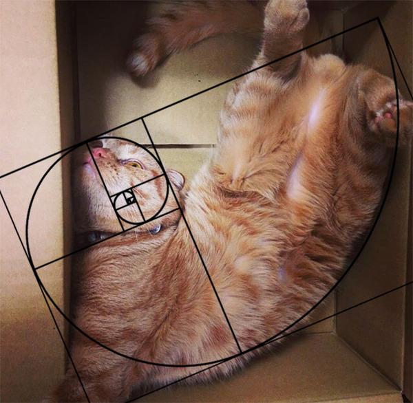 猫と黄金比の関係画像!猫の美しさの秘訣は黄金比にあり (17)