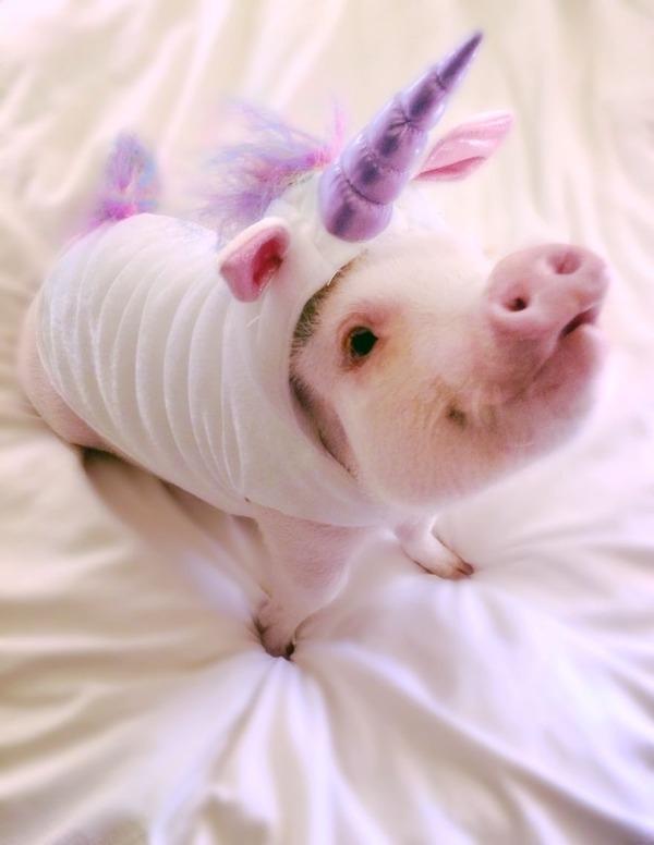 ペットのブタさん!ぶひぶひ可愛い小さなピンク! (2)
