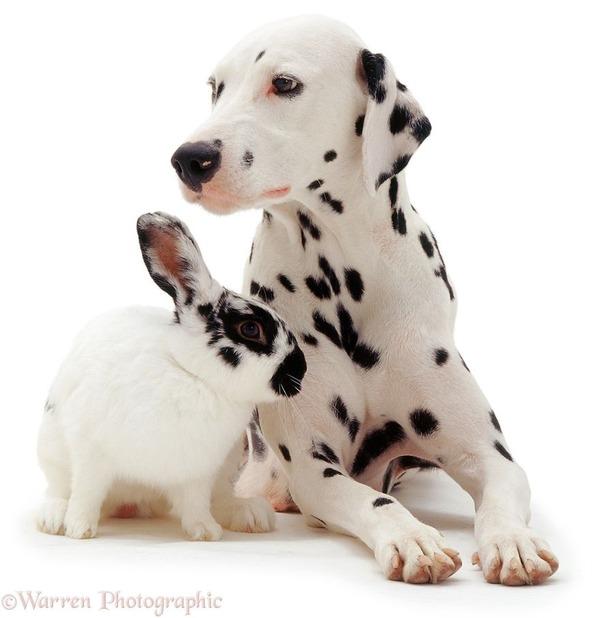 似てる!親が違うのにそっくりな動物画像30枚 (3)