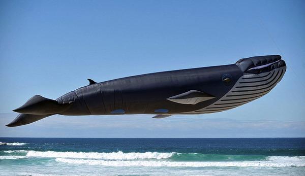 空の水族館!超大きいシロナガスクジラの凧がビーチに浮かぶ (5)