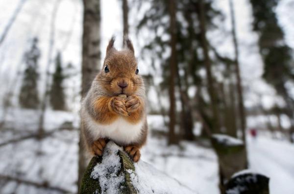 フィンランドの野生動物 10