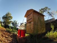 自動で蜂蜜を収穫できるミツバチの新しい巣箱を発明!