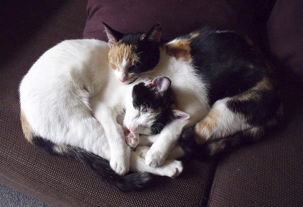 猫のバレンタインデー!【猫ラブラブ画像】 (54)