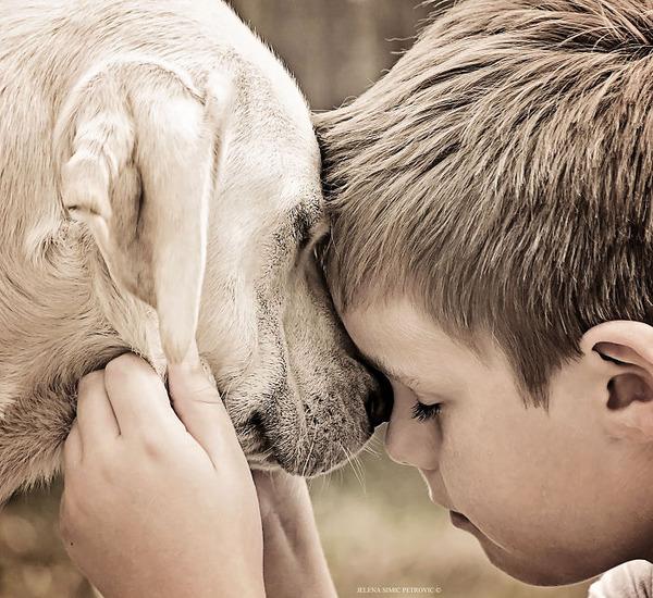 ペットは大切な家族!犬や猫と人間の子供の画像 (76)