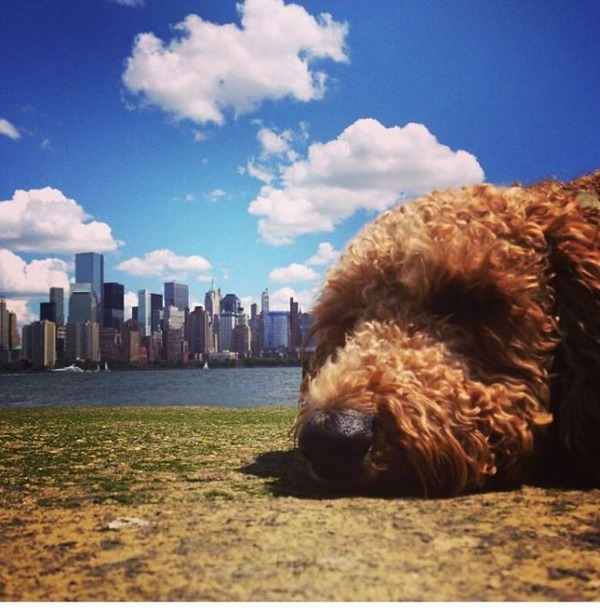 遠近感と錯覚の関係で超巨大に見える犬画像 (14)