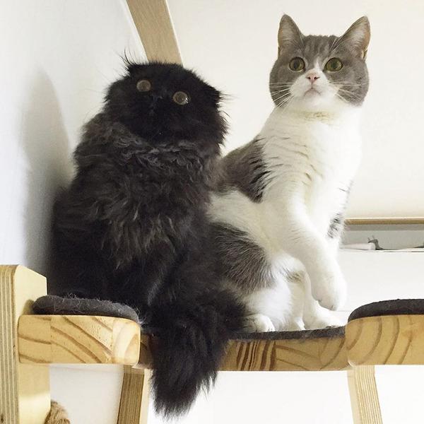 「まっくろくろすけ」みたいな黒猫画像!黒いモフモフ (15)