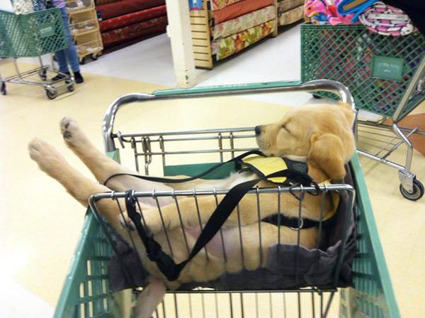 どこででも居眠りしちゃう子犬の可愛い画像 24