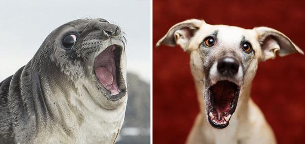 アザラシって犬そっくりじゃね?犬とアザラシを比較画像! (16)