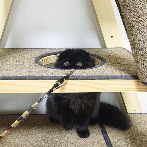 「まっくろくろすけ」みたいな黒猫画像!黒いモフモフ (2)