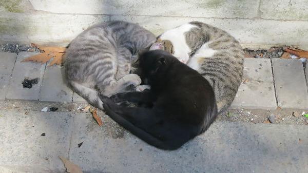 猫のバレンタインデー!【猫ラブラブ画像】 (42)