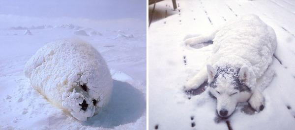 アザラシって犬そっくりじゃね?犬とアザラシを比較画像! (19)
