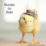 お洒落にきめるぜ!小さな帽子を被ったヒヨコのかわいい画像