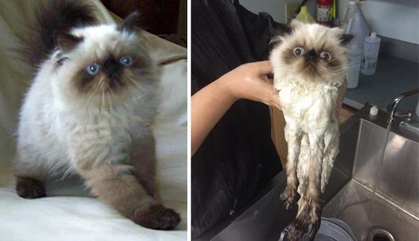 もふもふな動物たちがお風呂で変貌する…!【犬猫画像】 (25)