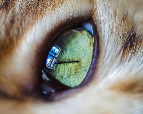 まさにキャッツアイ!綺麗な猫の瞳を撮影した画像16枚 (3)