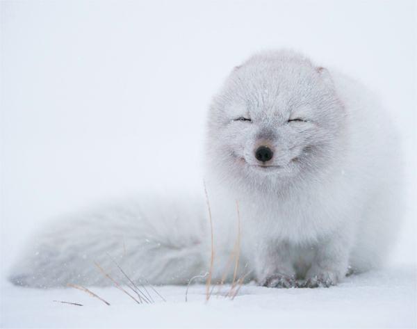 幸せそうな表情を見せる可愛い動物画像3