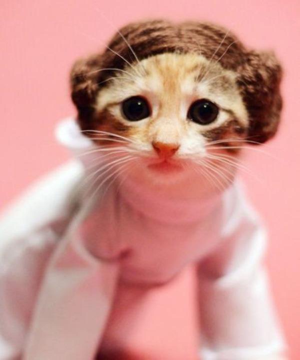 コスプレ猫!ハロウィンだし仮装した猫画像 (3)