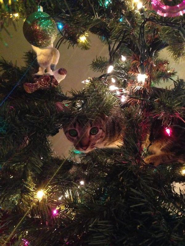 猫、あらぶる!クリスマスツリーに登る猫画像 (41)