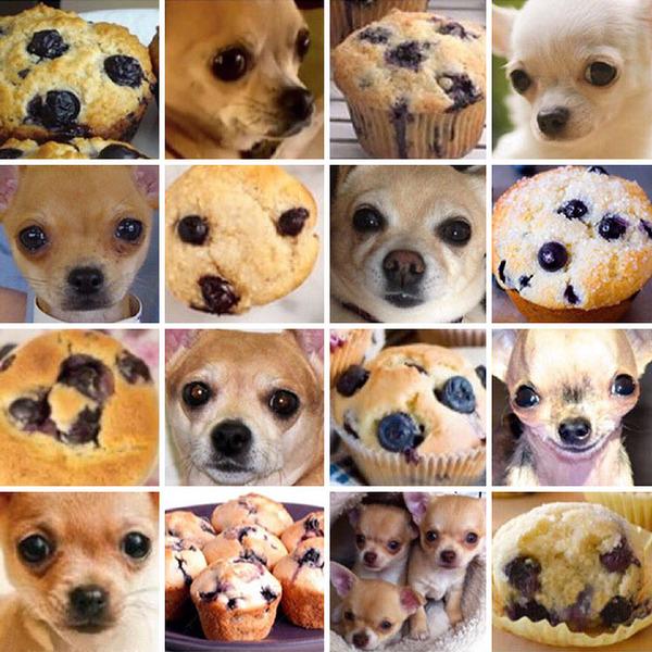 何かとそっくりな犬の比較画像 (8)