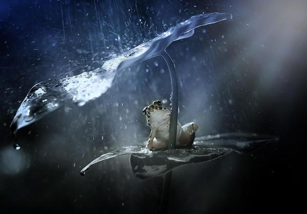 自然の傘を差す動物 6