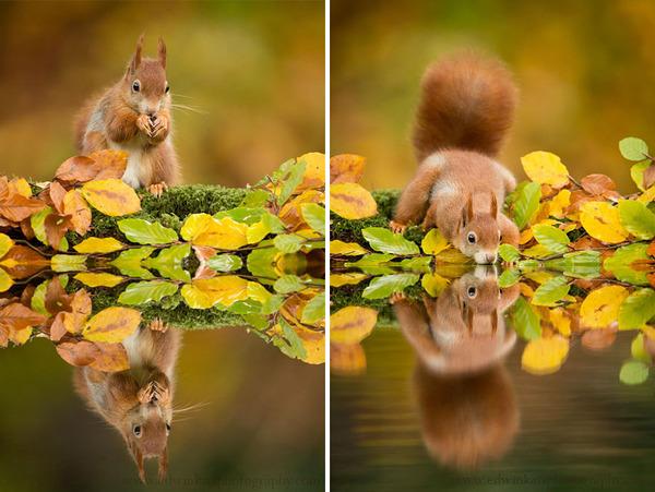 紅葉や秋の森の中を楽しむ動物たちの画像 (9)
