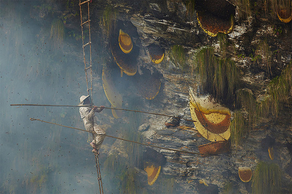 巨大な蜂の巣とのバトル!ネパールの伝統的な蜂蜜ハンター (1)