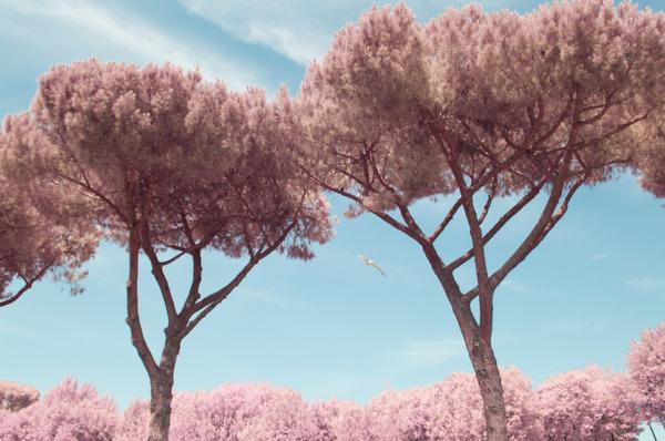 赤外線カメラで撮影されたイタリア・ローマの景色が幻想的 (13)